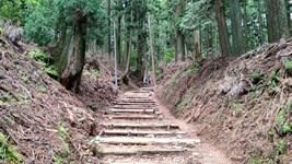 清滝から愛宕山に登る・・我にはキツイね